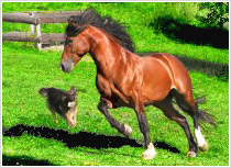Happy Animals - horse and dog playing together, jumping leaping and thoroughly enjoying each other's company